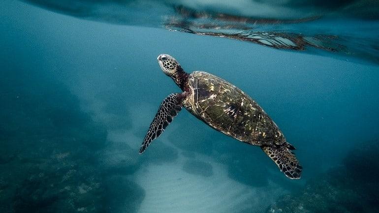 Unterwasserkamera Schildkröte